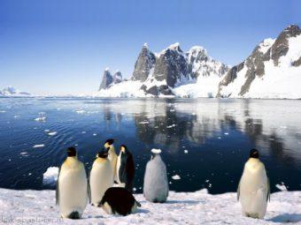 пингвины в Антарктиде фото