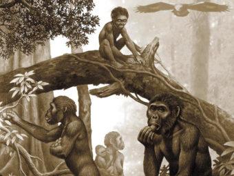 Картинка к статье отличие человека от животного