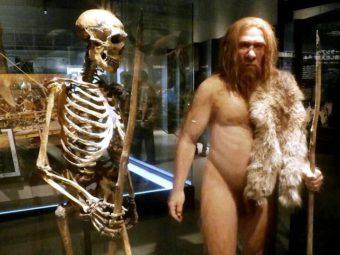 Фото музей неандертальцев