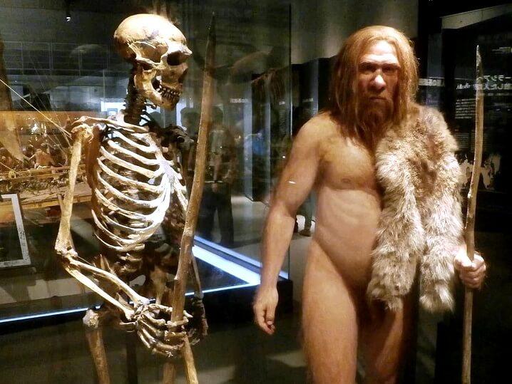Изучение неандертальцев — список основных событий