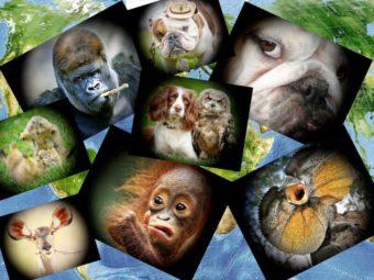 Фото животные в картинках