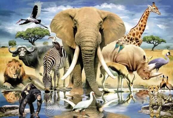 Картинка многообразие животного мира