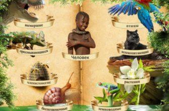 картинка к статье о многообразии жизни